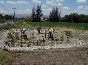 Volunteers planning a constructed wetland in Bolivia